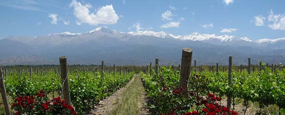 The Vineyards of Mendoza