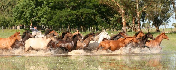 horse riding holidays in argentina