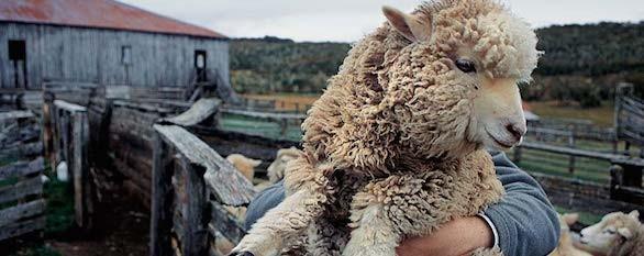 Estancia Tierra del Fuego