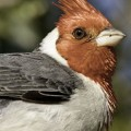 Bird-watching in the Ibera wetlands
