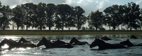 horse riding holiday in the ibera wetlands