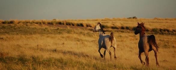 Patagonia horseback adventure