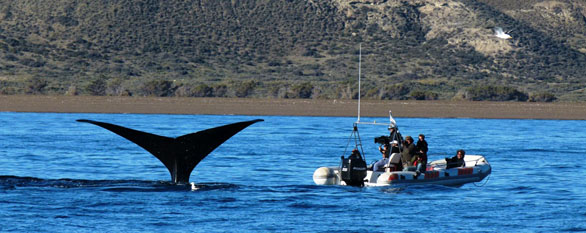 Marine Wildlife Safari in Patagonia